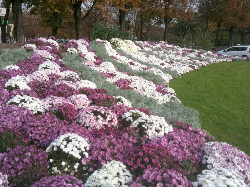 Plantings on the CHamps Elysee